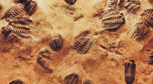 de-fossilize your business